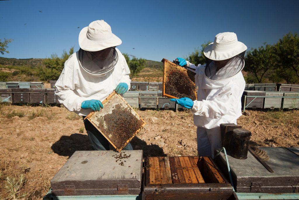 apicultura Andalucía