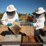 6,7 millones en ayudas para apicultura y mantenimiento de razas autóctonas en Andalucía
