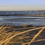 Aprobadas ayudas por 240.000 euros por las paradas en las pesquerías del palangre, el rastro y el marisqueo de la chirla