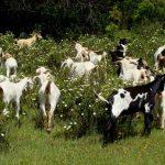 La ganadería y la pesca ante el Estado de Alarma por el coronavirus