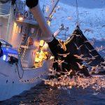 Pesca sostenible: el objetivo de un estudio de científicos de la UCA y la UMA